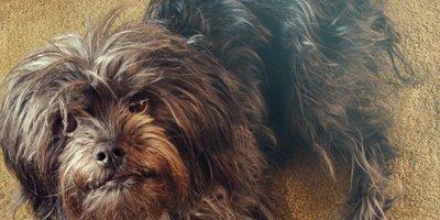 24 Honden die niet (of nauwelijks) verharen 9