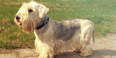 24 Honden die niet (of nauwelijks) verharen 1