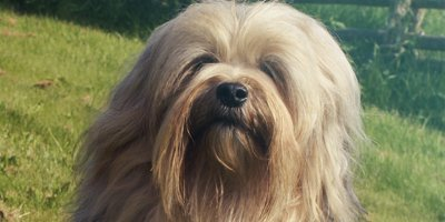 24 Honden die niet (of nauwelijks) verharen 6