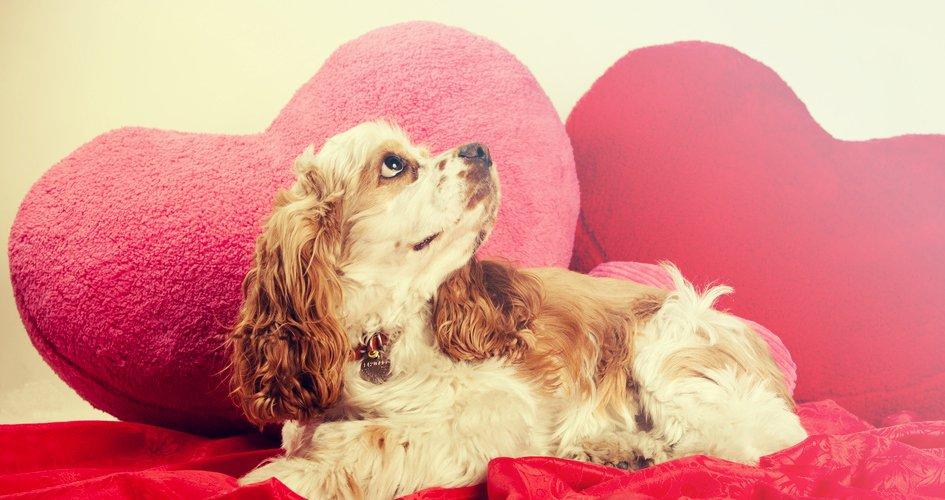Valentijnsdag hond
