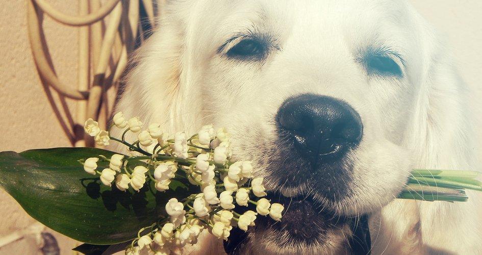 5 Honden die helemaal klaar zijn voor Valentijnsdag! 1